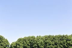 Trees and blue sky Royalty Free Stock Photos
