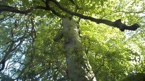 Trees & Bluebell Path Nr. Crookham, North Northumberland, England stock video