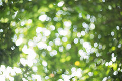 Trees blur abstract background Royalty Free Stock Images