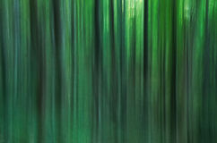 Trees in a blur Royalty Free Stock Images