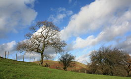 Trees and Blustery Sky Stock Photos