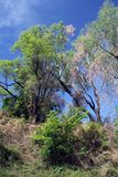 Trees on bly sky. Australia. Bush Trees on bly sky. Nothern Australia stock photography