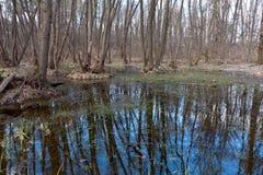 Trees on bog Stock Photo