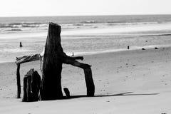 Trees on Boneyard Beach Bull Island SC stock photo