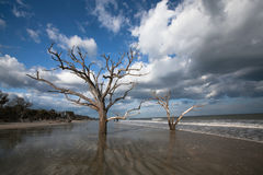 Trees Boneyard Beach Forest, Botany Bay, SC. When sea levels rise and sands shift, maritime forests fall to the elements.  At Botany Bay Plantation near Stock Images