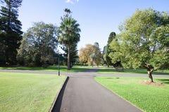 Trees at botanical garden, Sydney, Australia Royalty Free Stock Photography