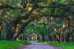 Trees of Botany Bay Royalty Free Stock Image