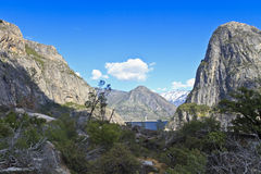 Trees and brambles at Hetchy Hetchy Royalty Free Stock Photo