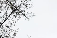 Trees branches Stock Photography