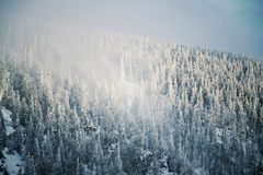 Trees branches bent under weight of snow and hoarfrost in beautiful snowy foggy winter landscape, Krkonose Mountains royalty free stock image