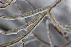 Branches fully encapsulated in ice Royalty Free Stock Photos