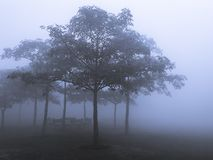 Trees and branches in foggy weather stock image