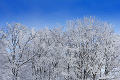 Trees with branches full of snow whit blue sky. In background Royalty Free Stock Images