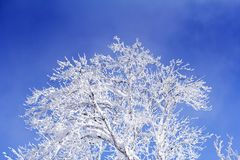Trees with branches full of snow whit blue sky. In background Royalty Free Stock Photos