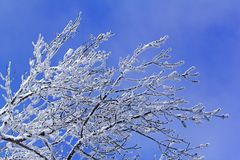 Trees with branches full of snow whit blue sky. In background Stock Photos