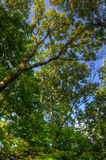 Trees branches with leaves, Mainz, Rheinland-Pfalz, Germany.  Royalty Free Stock Images