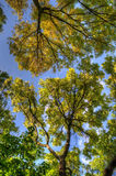 Trees branches with leaves, Mainz, Rheinland-Pfalz, Germany.  Stock Photos