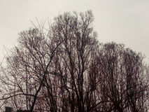 Trees. The branches of the trees outside the city in winter Royalty Free Stock Photos