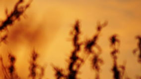 Trees branches on sunset, in April. Trees branches on sunset. Spring stock video footage