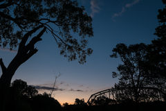Trees and a bridge silhouetted against the sunset. Stock Images
