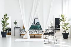 Trees in bright bedroom interior. Canopied bed with white cloth in bright bedroom interior with black chair, rug and ficus trees Stock Images
