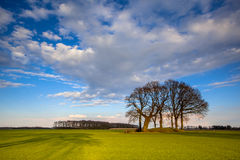 Trees in the bright colored spring landscape of the Netherlands Royalty Free Stock Images