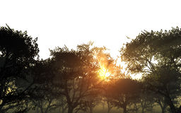 Trees On Bright Sky With Sun Royalty Free Stock Photos