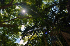 Trees and bright sun Royalty Free Stock Photography