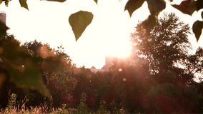 Trees and bright sun. Roof of building in distance. House in the grove. Get lost in the quiet stock footage