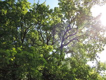 Trees and bright sunshine. Royalty Free Stock Photos