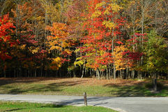 Trees in brilliant fall colors. Clead fall day in ohio with trees containing leaves chaging into fall colors Stock Photos
