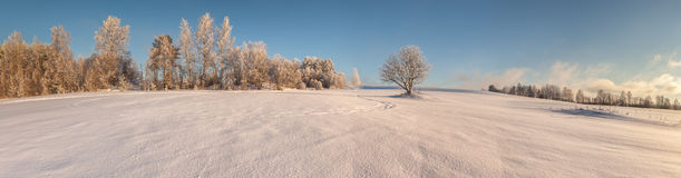 Trees on the brink of a winter snow-covered field Royalty Free Stock Photos