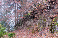 Trees at a broken edge of the terrain in the quarry at Bromberg Royalty Free Stock Images