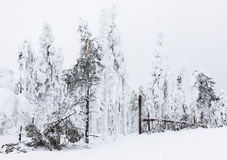 Trees broken by snow Stock Photography