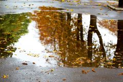 Trees with brown autumn leaves are reflected in the puddle during the rain_ royalty free stock images