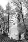 Trees bu the water. Trees on water bank, black and white royalty free stock images
