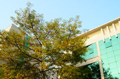 Trees and buildings Royalty Free Stock Photos
