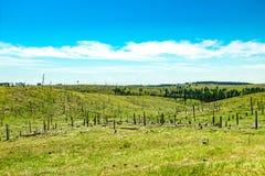 Trees burned down on hillside Stock Image