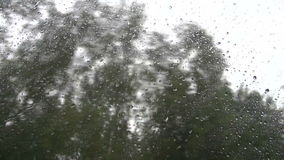 Trees through bus window on rainy day. Trees through car bus window on rainy day stock video footage