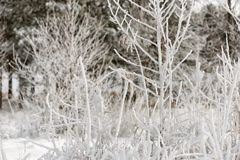 Trees and bush covered with hoarfrost snow Stock Images
