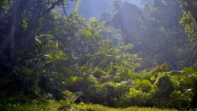Scenery of rain forest stock image