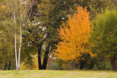 Trees and bushes in the autumn park Royalty Free Stock Photography