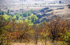 Trees and bushes at canyon. View of Aktovskiy Canyon, Nikolaev region, Ukraine Royalty Free Stock Photo