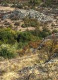 Trees and bushes at canyon Royalty Free Stock Photo