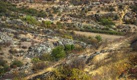 Trees and bushes at canyon Royalty Free Stock Image