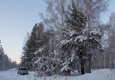 Trees and bushes and car in snow. Trees and bushes and blue car in snow in the winter in forest Stock Image