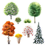 Trees and bushes  during different seasons. Hand drawn watercolor illustration. Set of trees and bushes during different seasons. Evergreen and deciduous plants Royalty Free Stock Photo