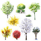 Trees and bushes  during different seasons. Hand drawn watercolor illustration. Set of trees and bushes during different seasons. Evergreen and deciduous plants Stock Photography