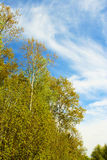 Early fall. Trees and bushes grow in the woods in the early fall on the backdrop of the sky with clouds royalty free stock images
