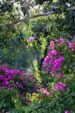 Trees and bushes in a park. Trees, bushes and purple bougainvillea flowers in a park royalty free stock photo